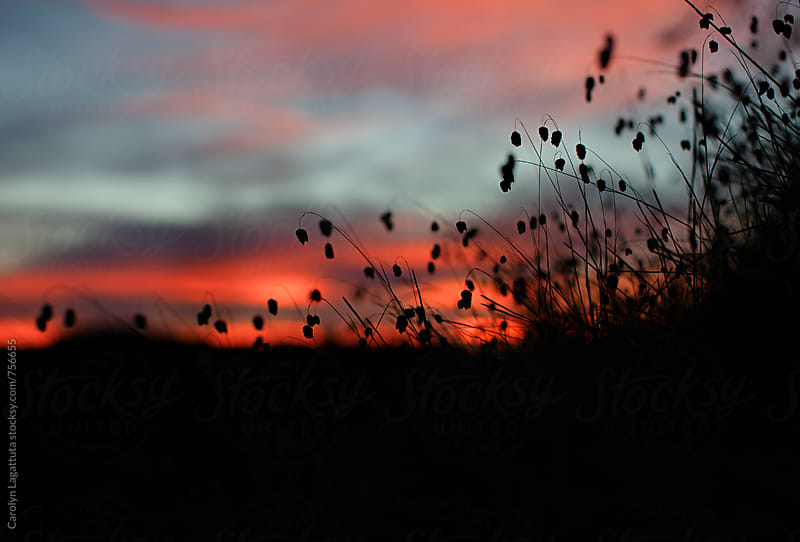 Silhouetted weeds in front of a vibrant sunrise by Carolyn Lagattuta for Stocksy United