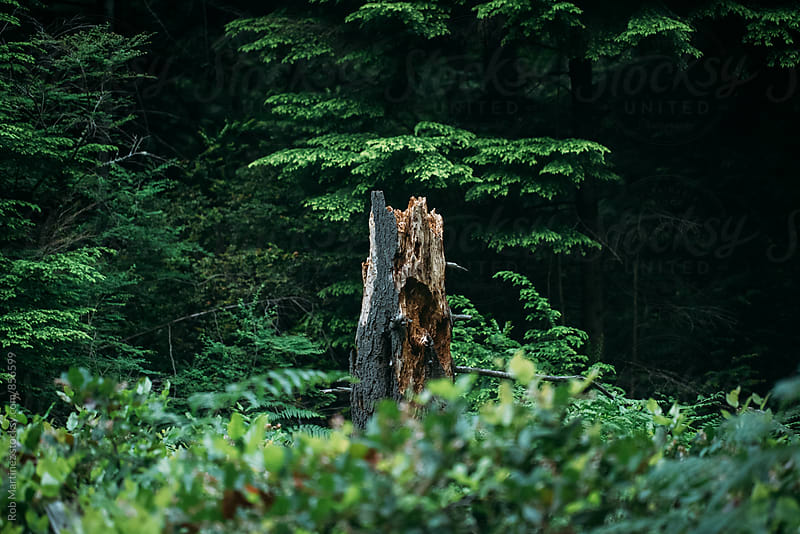 LOG IN THE WOODS by Rob Martinez for Stocksy United