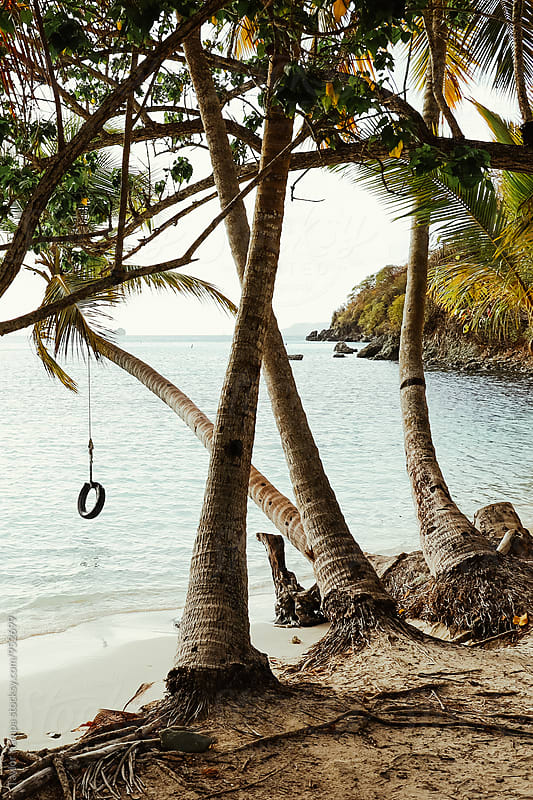 Tropical Tire Swing by Taylor Kampa for Stocksy United