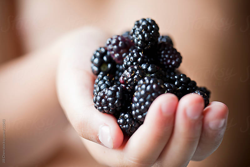 Wild Blackberries by Jill Chen for Stocksy United