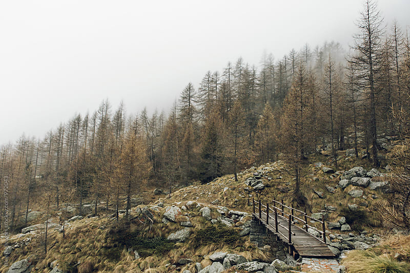 winter forest landscape with a rustic mountain bridge  by Jordi Rulló for Stocksy United