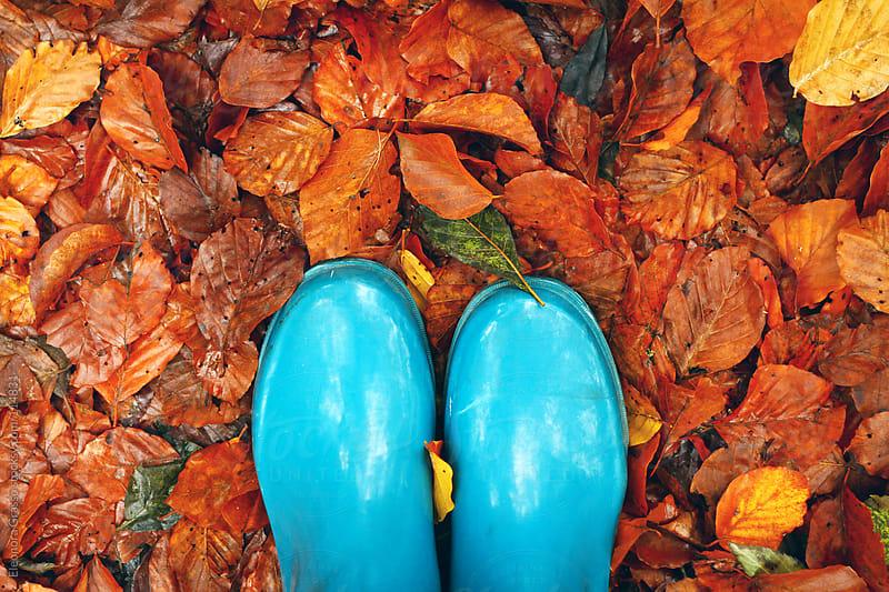 Autumnland by Eleonora Grasso for Stocksy United