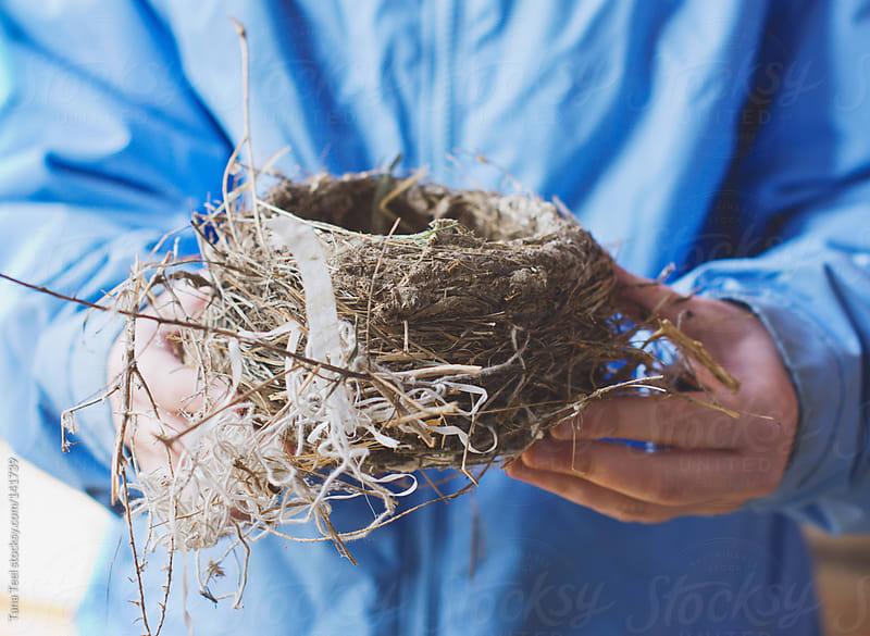 An empty bird nest left behind by barn sparrows by Tana Teel for Stocksy United