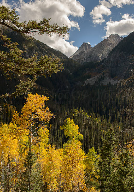 Yellow aspens with rocky peaks behind by Mick Follari for Stocksy United