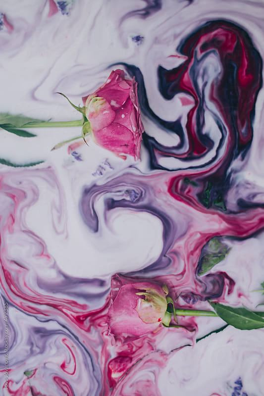 Two pink roses immersed in colorful milk by Jovo Jovanovic for Stocksy United