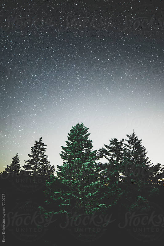 Stars Over Tree Tops by Evan Dalen for Stocksy United