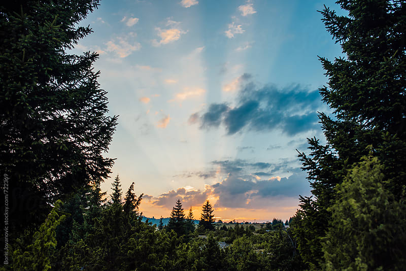 Beautiful sunset between the trees  by Boris Jovanovic for Stocksy United