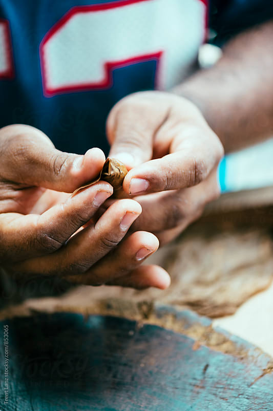 Close-up of man's hands rolling cigar by Trent Lanz for Stocksy United