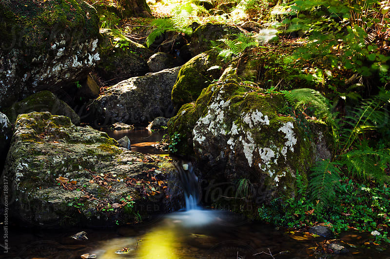 Waterfall in italian mountain woods by Laura Stolfi for Stocksy United