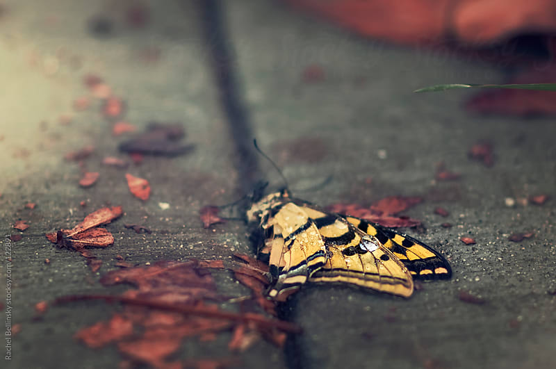 A butterfly with a dew drop on its wing dies on the cold sidewalk by Rachel Bellinsky for Stocksy United