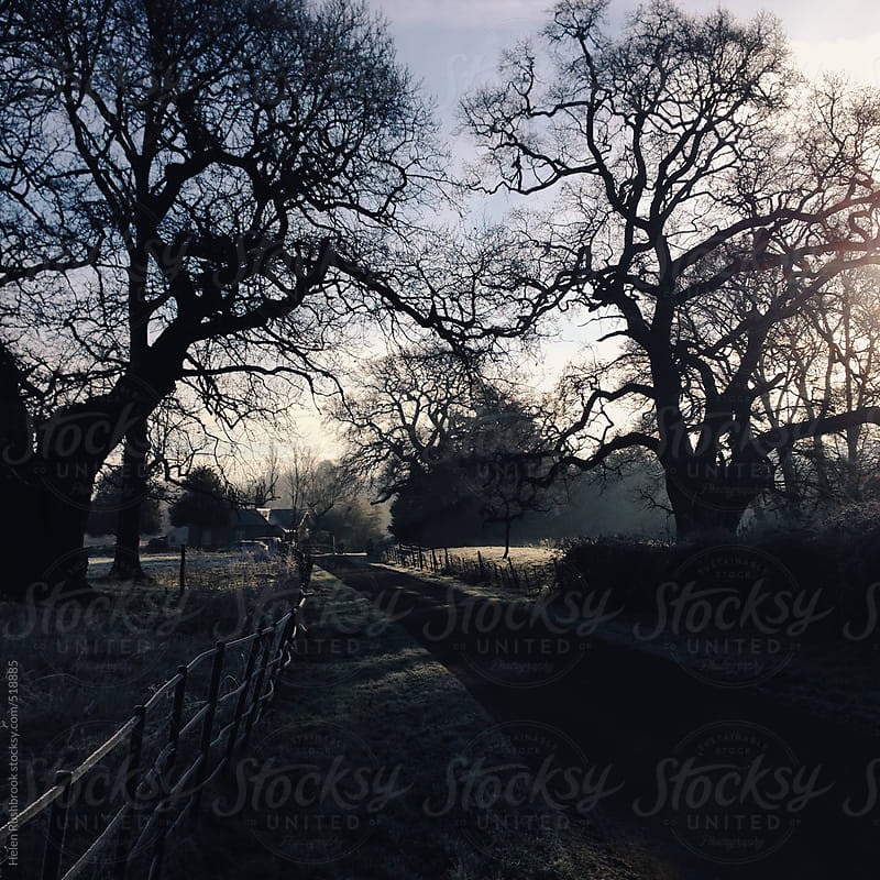 Patches of sunlight on a tree-lined country road, lined with estate fencing. by Helen Rushbrook for Stocksy United
