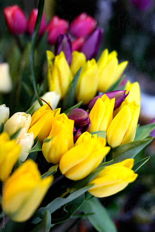 Tulip bouquets by Orsolya Bán for Stocksy United