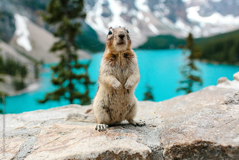A standing chipmunk at Moraine Lake  by Kristen Curette Hines for Stocksy United