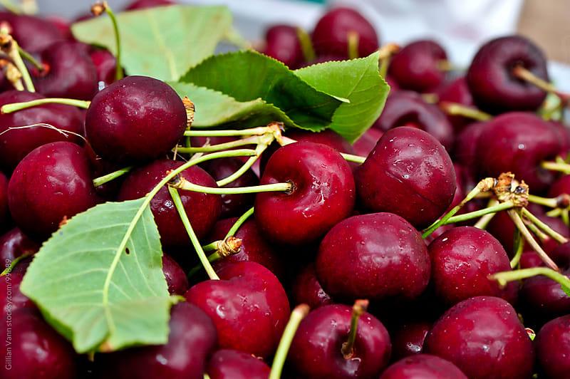 cherries, natural by Gillian Vann for Stocksy United