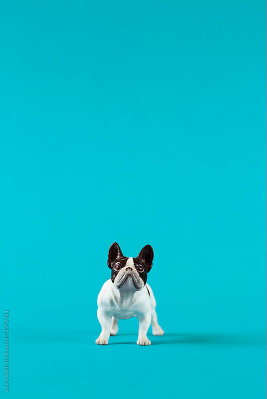 French bulldog shaped puppet on marine blue background by Laura Stolfi for Stocksy United