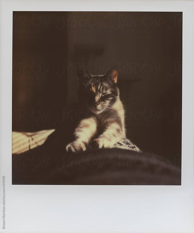 Polaroid of A Cat Sitting in the Sunshine by Briana Morrison for Stocksy United
