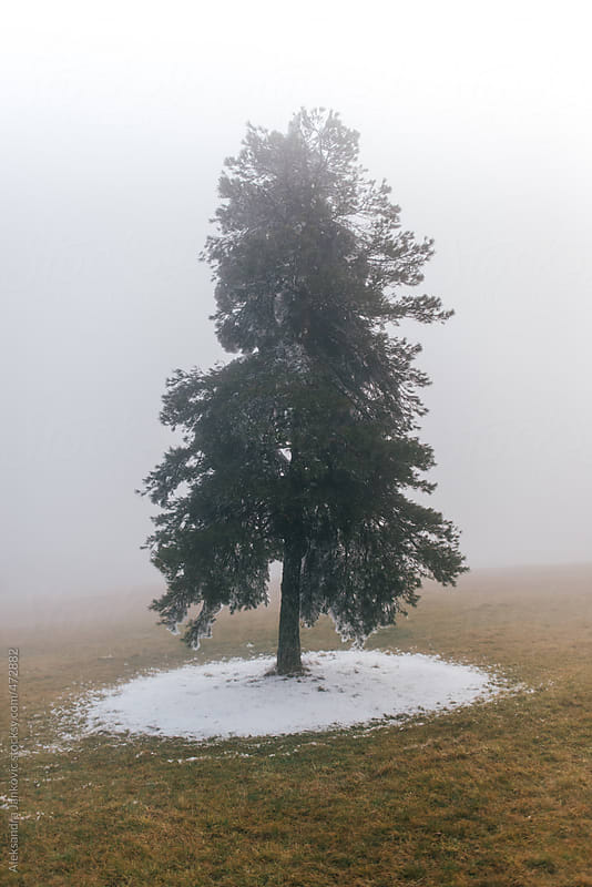 Foggy winter landscape with single pine tree by Aleksandra Jankovic for Stocksy United