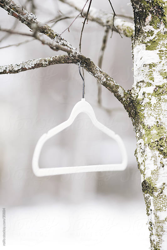 hanger outdoors hanging on birch tree by rolfo for Stocksy United