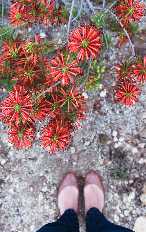 Standing above some native plants at the arboretum by Carolyn Lagattuta for Stocksy United