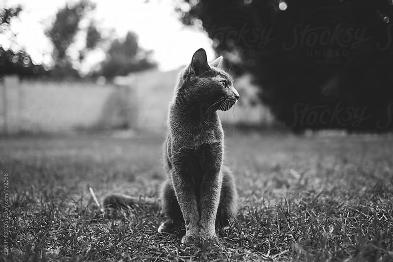 Sitting Cat by ZOA PHOTO for Stocksy United