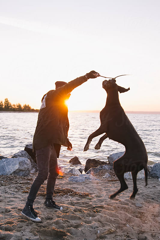 Man playing with his dog at the shore by Danil Nevsky for Stocksy United