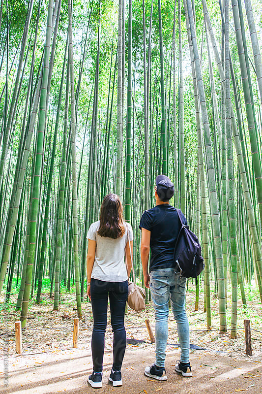 Back view of couple looking the bamboo forest. by BONNINSTUDIO for Stocksy United