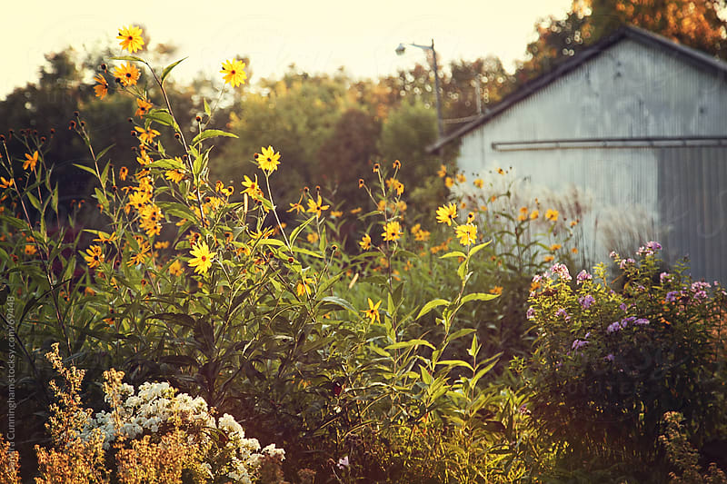 Summer flower garden at senset by Sandra Cunningham for Stocksy United