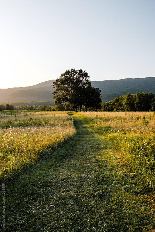Path to Tree by Joe Dodd for Stocksy United