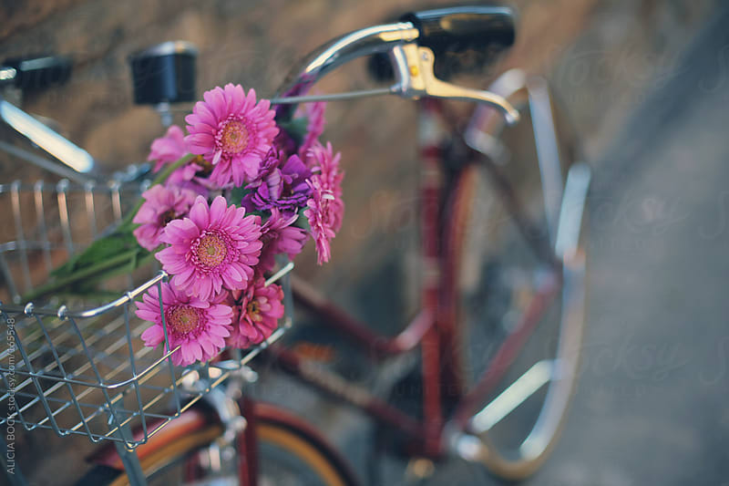 Bike with Pink Zinnia Flowers in the Basket by ALICIA BOCK for Stocksy United