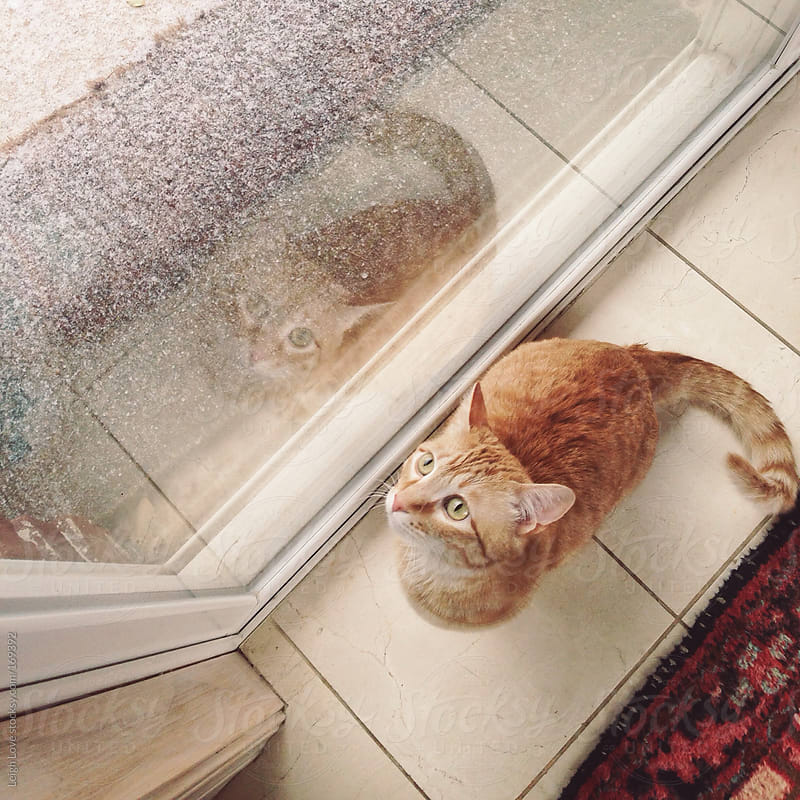 Orange Tabby Cat and His Reflection  by Leigh Love for Stocksy United