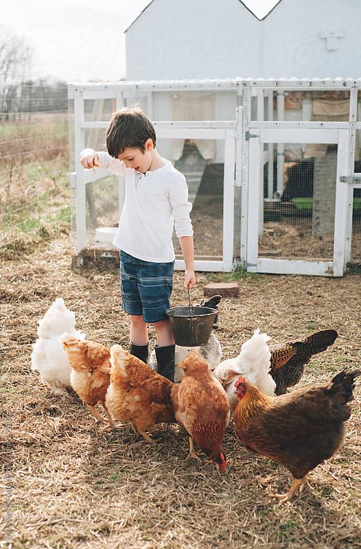 Chicken coop by Melanie DeFazio for Stocksy United