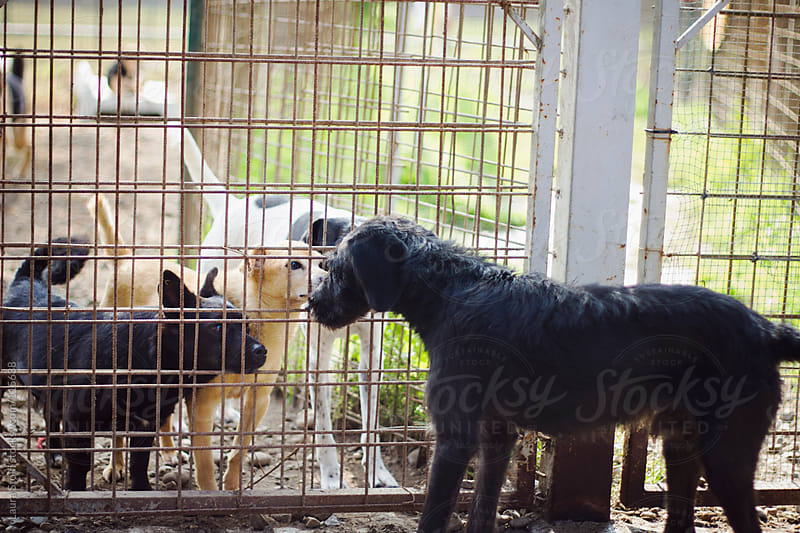 Stray dogs having contact through a wire in dog pound by Laura Stolfi for Stocksy United