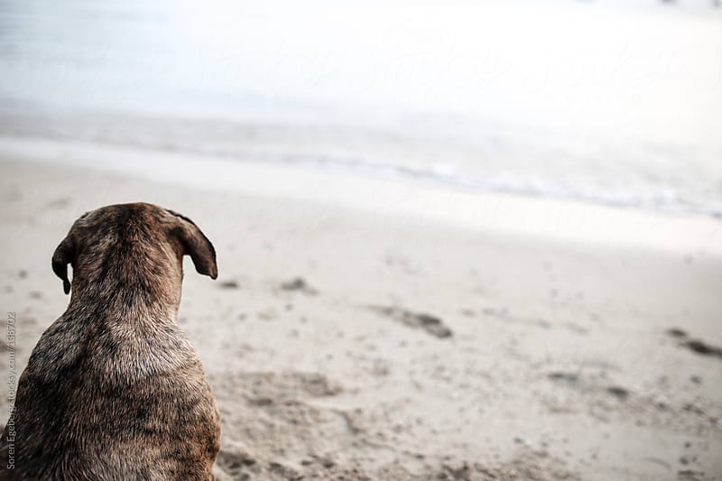 Back view of dog sitting in the sand on empty beach by Soren Egeberg for Stocksy United