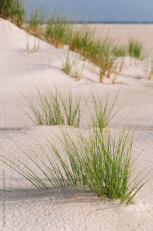 Beach sand dune and grass by Matthew Spaulding for Stocksy United