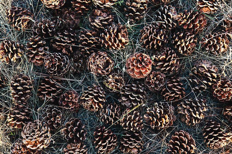 Pile of ponderosa pinecones, Oregon by Paul Edmondson for Stocksy United