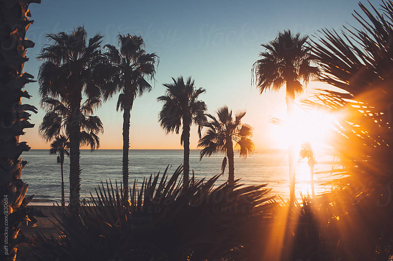 Sun rays through palm trees over the oceanside, California  by paff for Stocksy United