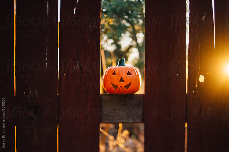 Pumpkin On Fence by Jessica Byrum for Stocksy United