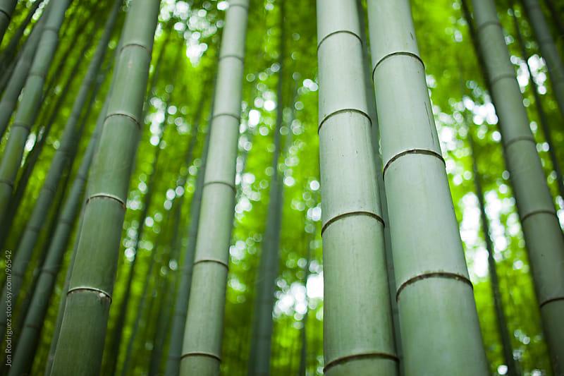 Arashiyama forest, Kyoto, Japan. by Jon Rodriguez for Stocksy United