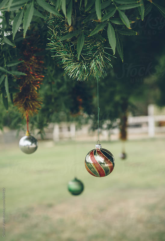 colorful christmas ornaments hanging in tree outdoors, bush christmas in Australia by Gillian Vann for Stocksy United