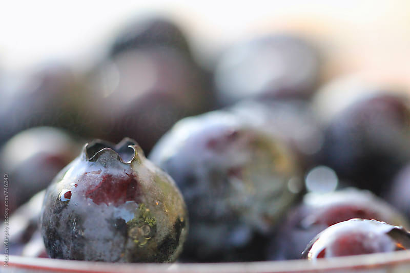 Closeup of freshly rinsed organic Blueberries by Monica Murphy for Stocksy United