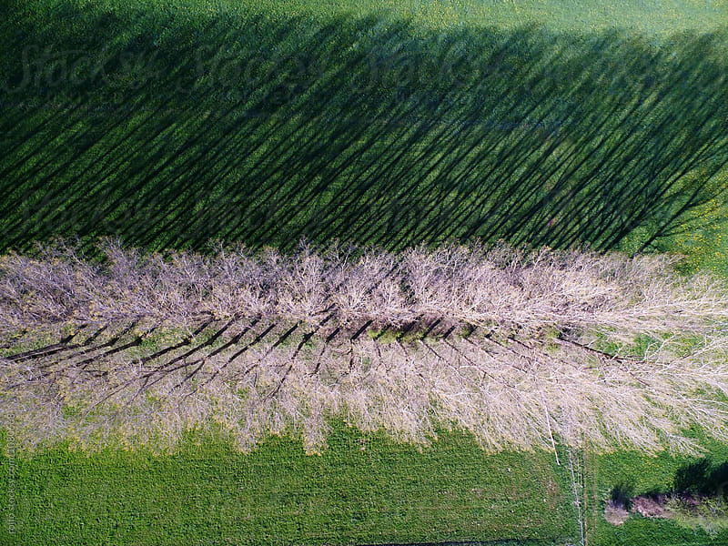 White trees on green grass from above by rolfo for Stocksy United