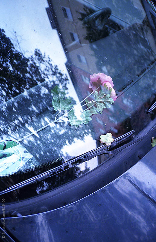 Flowers inside the car by Dina Lun for Stocksy United