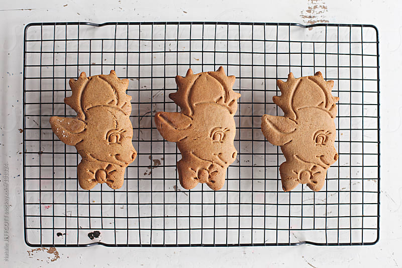 Gingerbread reindeer cooling on rack, to be iced for Christmas by Natalie JEFFCOTT for Stocksy United
