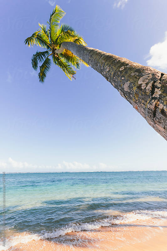 Palm tree and beach in tropical island by Alejandro Moreno de Carlos for Stocksy United