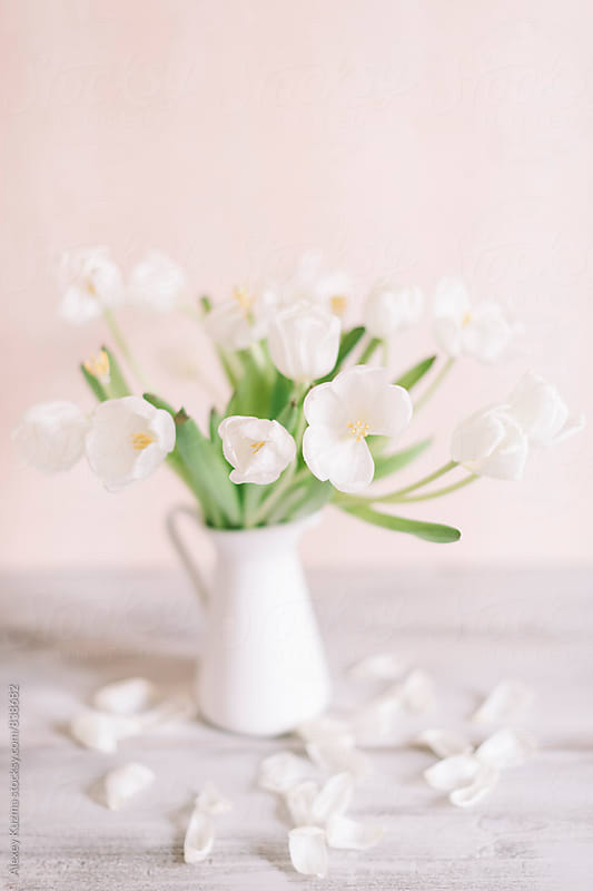 White Tulips in Closeup by Vesna for Stocksy United
