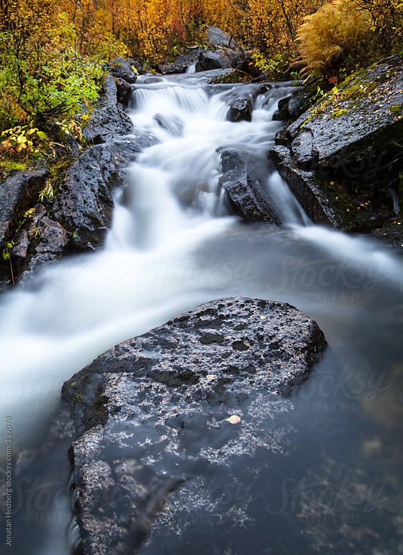 A forest creek in the fall by Jonatan Hedberg for Stocksy United