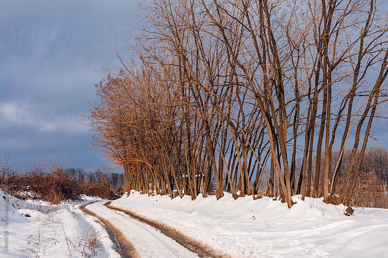 Countryside road during the winter by Dimitrije Tanaskovic for Stocksy United