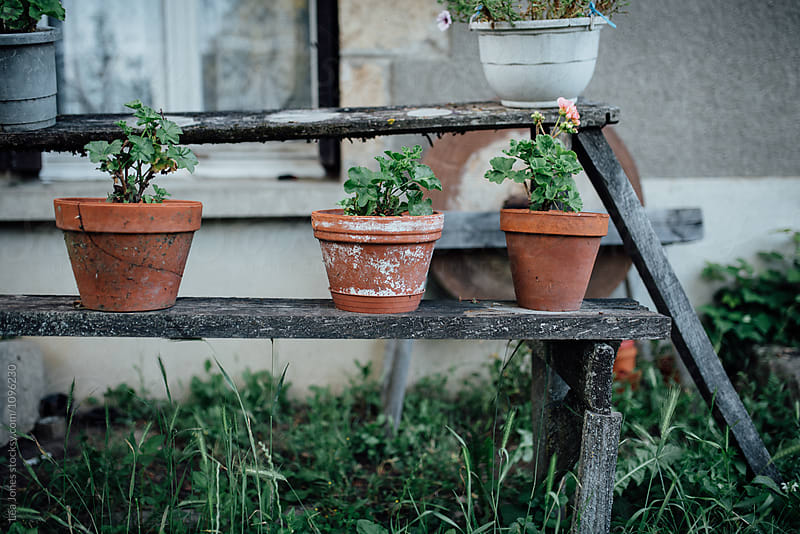 flower pots in front of farmhouse by Léa Jones for Stocksy United