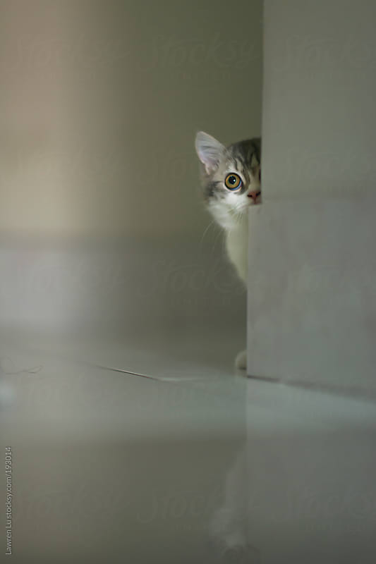 Cat looking around at the corner by Lawren Lu for Stocksy United