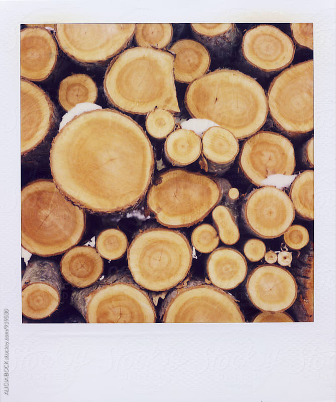 Polaroid Photograph Of Stacked Cut Fire Wood by ALICIA BOCK for Stocksy United